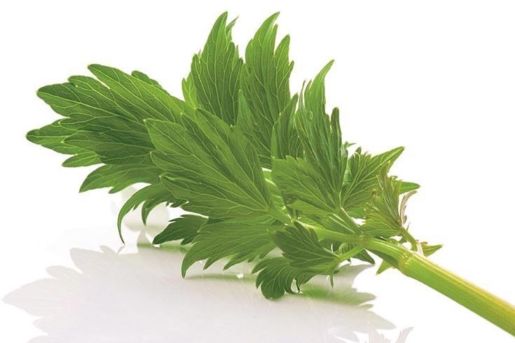 for flavoring stews soups salads lovage google search see more lovage ...