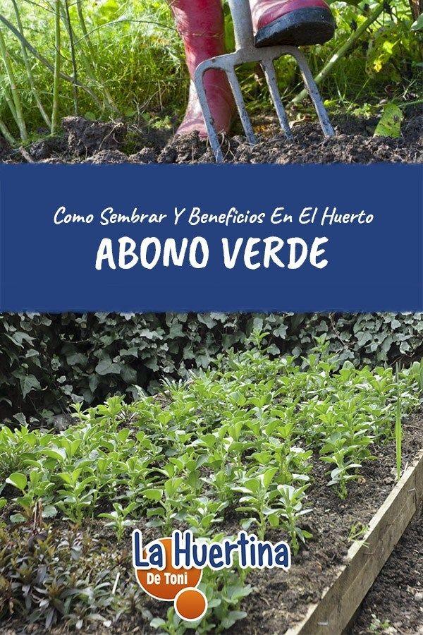 Como Y Porque Sembrar Abono Verde Siembras Abono Jardineria Y Plantas