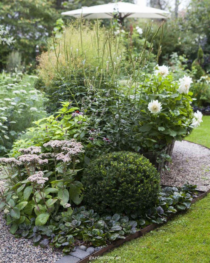 Revsuga som kantväxt – www.gardenflow.se