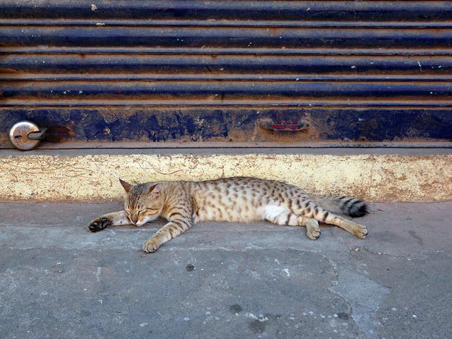 Street cat - Bazaar Road, Fort Kochi, Kerala, India. My favourite picture this trip! © 2016 a kiwindian couple.