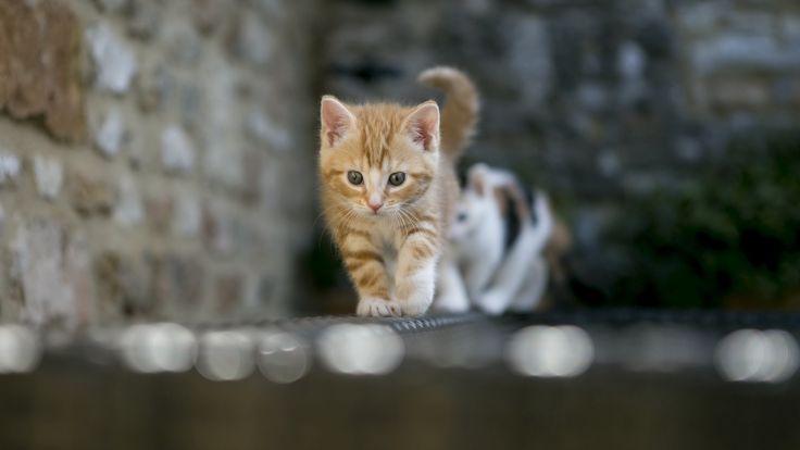 funny cat wallpapers HD – wallpapermonkey.com
