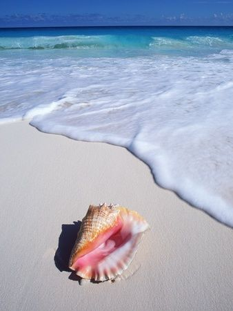 Mexico, Yucatan Peninsula, Carribean Beach at Cancun, Conch Shell on SandBy Chris Cheadle – BeautyofSelah | Christian Lifestyle + Travel Tips | Homeschool | DIY | Wife+Mommy Life | Christian T
