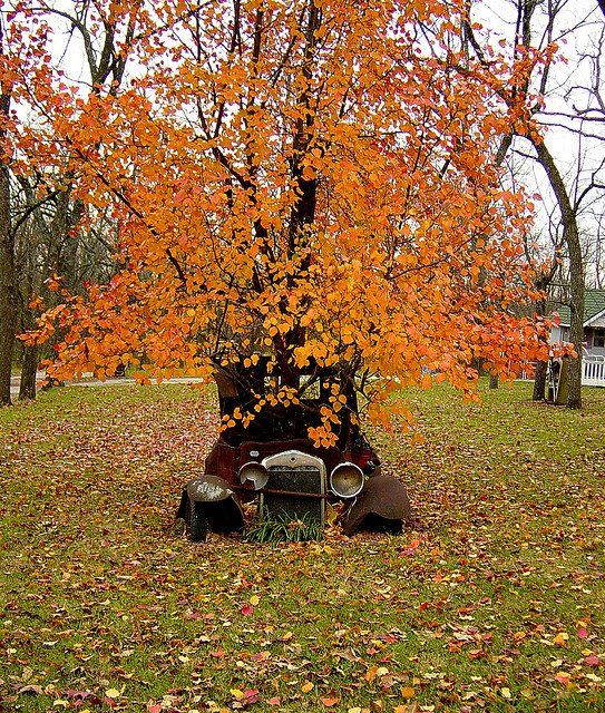autumn tree growing out of an old car!                                                                                                                                                                                 More
