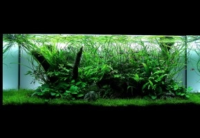 Award Winning Natural Aquarium Design company
