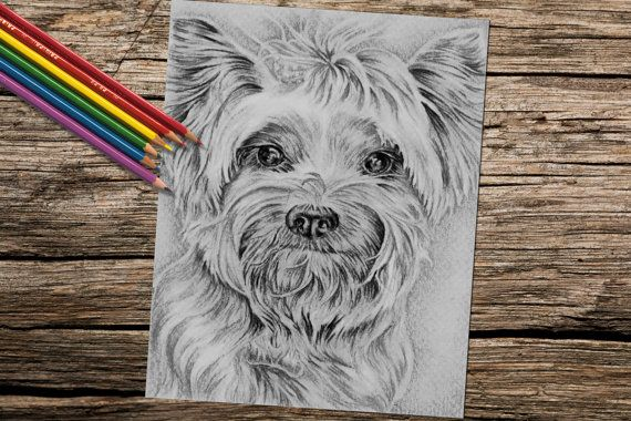 Is this much cute-ness even legal? This beautiful coloring page is perfect for relaxing, practicing my coloring technique and showing off! See more printable coloring pages @ https://www.etsy.com/shop/ArtistrybyLisaMarie?section_id=17867395&ref=shopsection_leftnav_4