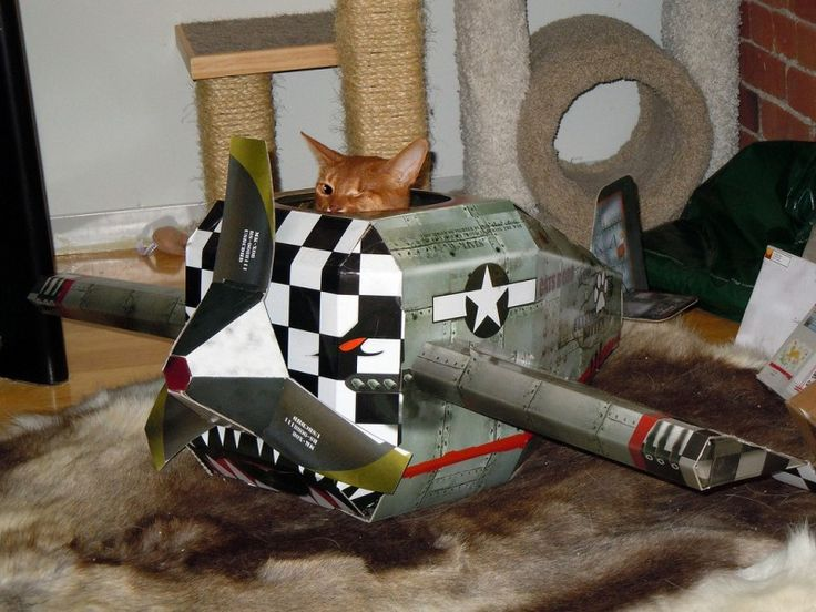 One-eyed Angel flies like an angel in her Cat Scouts Cardwood Derby entry! #cardwoodderby