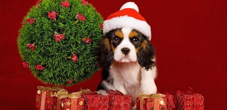 #Chic4Dog #news - Allargare la famiglia con un cucciolo. Adozione o acquisto? Scopri qui cosa mettere sotto l'albero http://blog.chic4dog.com/2014/12/cucciolo-sotto-lalbero-adozione-o-acquisto/