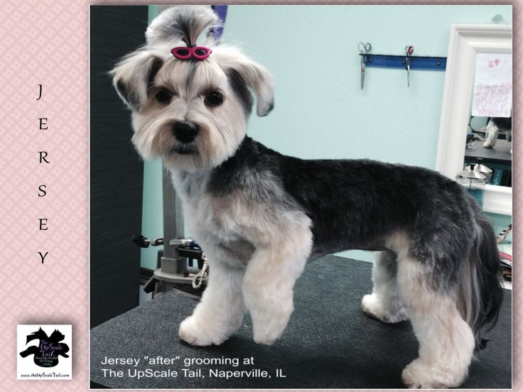 46 best grooming images on pinterest dog grooming business dog the upscale tail pet grooming salon naperville il theupscaletail solutioingenieria Choice Image