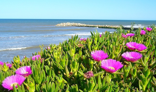 Argentina: Wildflowers, Mar Del Plata