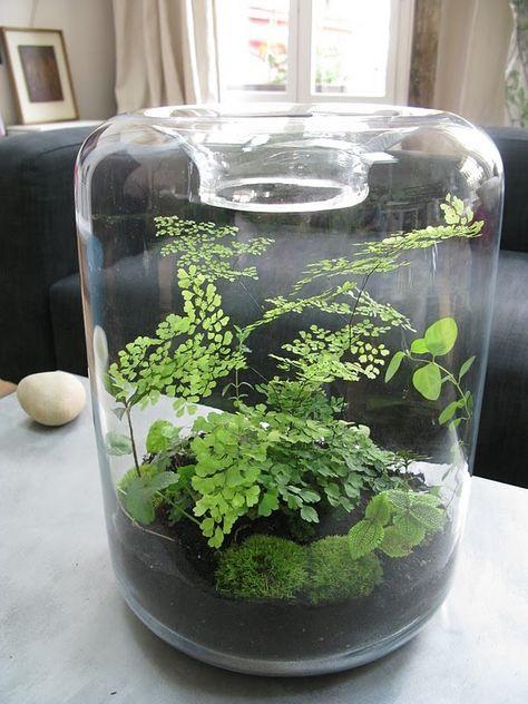 17 best ideas about terrarium on pinterest diy terrarium for Jardin glass jars
