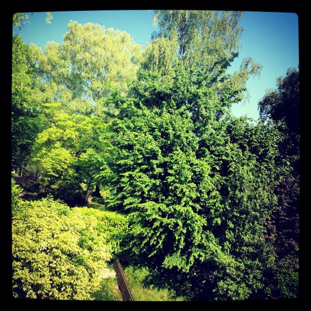 Nature =)