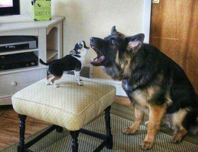 Смотреть смешные картинки про собак до слез