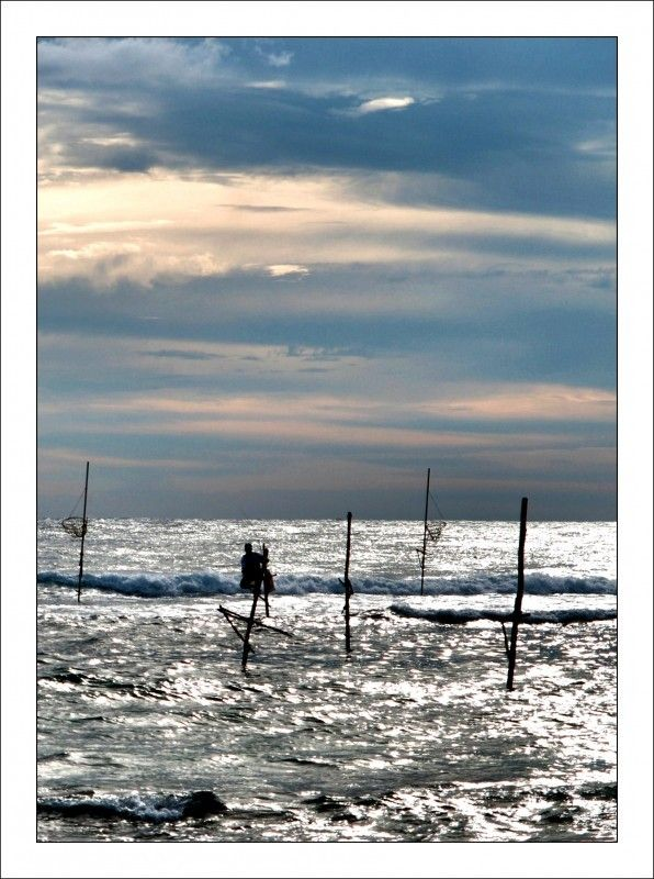 Paalvisser - foto gemaakt in Zuid Sri Lanka