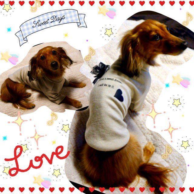 もう1枚🤗❤ぽかぽかニットを可愛く着てくれています😘✨ななちゃんモデルちゃんもすごく上手でステキなお写真に感謝です💓💓💓まだ寒い日があるので、ぽかぽか素材で温かく過ごしてね〜😊💕ママさんこの度はありがとうございました❤️ #犬服のお店dear 💛 @dear_shop.jp 💛#チワワ#ちわわ#愛犬#ロンチー#ロングコートチワワ#chihuahua #多頭飼い#わんこ#スムースチワワ#ハンドメイド犬服#ふかふかベッド #マルチーズ #ヨークシャテリア#迷子札#犬服#カフェマット#トイプードル#ティーカッププードル#カニヘンダックス #チワックス#モデル犬#ペットグッズ#首輪 #パピー