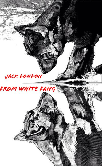 Jack London from White Fang