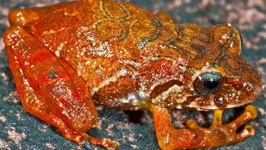 New frog species, named for director James Cameron, discovered in Venezuela.