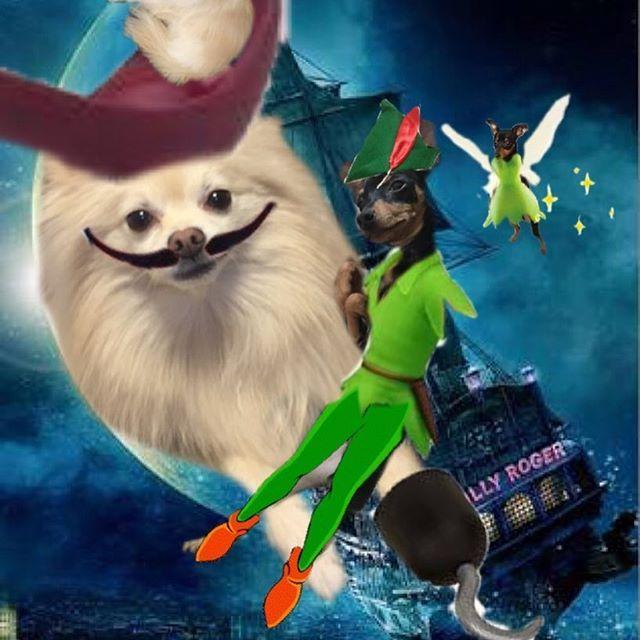 ピンターパン・てんカーベルと、ムック船長🐶  #動物#愛犬#ペット#ミニチュアピンシャー #ポメラニアン#合成#コラージュ #アニメ#映画#子ども#ディズニー#ピーターパン#ティンカーベル#フック船長#パロディ
