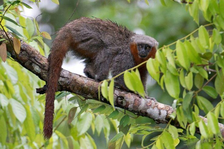 Investigadores identificaron 381 nuevas especies de plantas y animales en la Amazonía, según un informe del Fondo Mundial para la Vida Silvestre (WWF) y el Instituto Mamirauá presentado este miércoles en Sao Paulo. La lista incluye 216 plantas, 93 peces, 32 anfibios, 19 reptiles, un ave y 20 mamíferos, dos de ellos fósiles, precisa el …