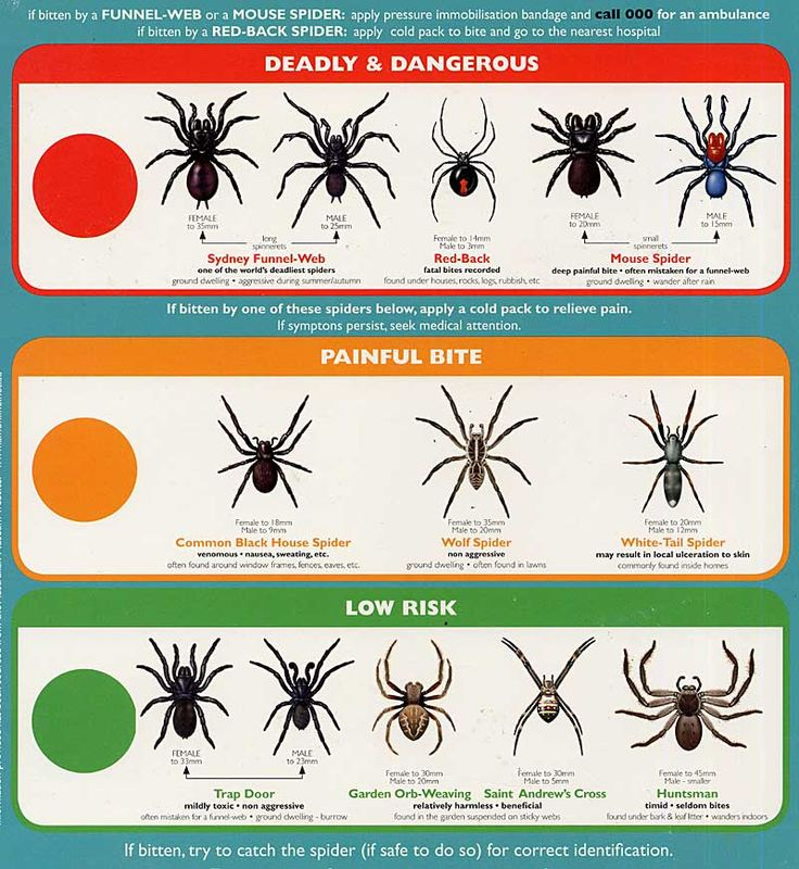 Spider Identification – Types of Spiders | Wolfspider.org