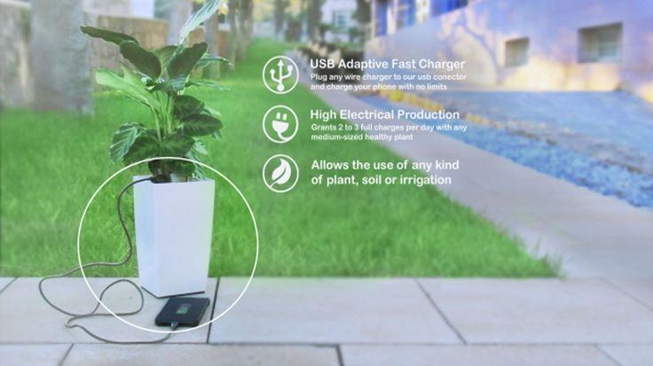 Bioo Lite produz energia renovável com o poder da fotossíntese das plantas