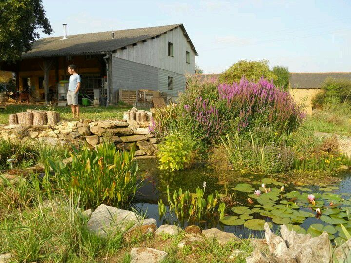 Maximise use of resources: this is the pond that is fed by a reed bed that filters the household's water & urine. The pond is very clean & their ducks enjoy it. Brittany Gite