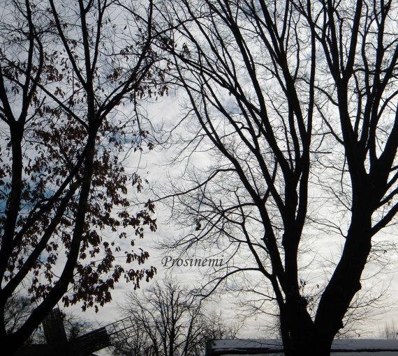 Winter trees photo print fog  park nature photo par prosinemi, €15.00