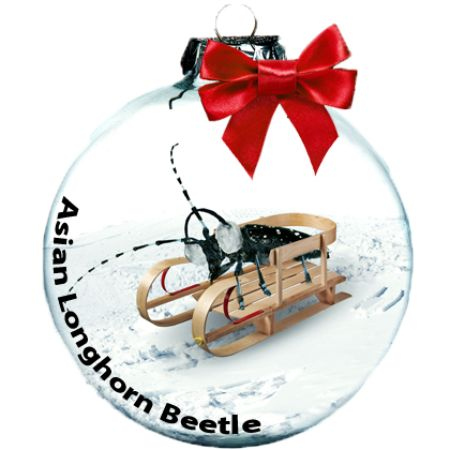 On the sixth day of Christmas, Asian Long-horned Beetles gave to me, deforested maple tree stands... The Spread Holiday Issue: Twelve Invasives of Christmas