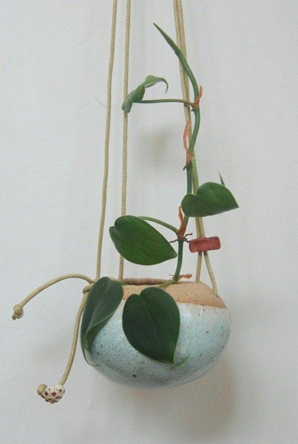 plantes d 39 int rieur suspendus fleurs grimpantes ampel. Black Bedroom Furniture Sets. Home Design Ideas