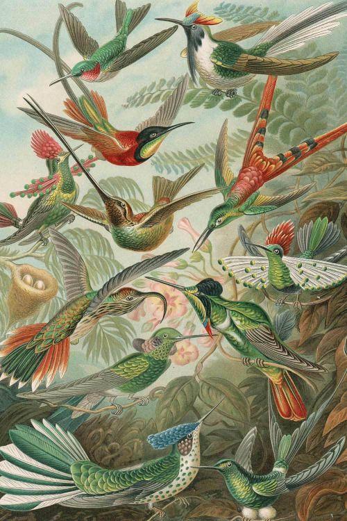 delivermetoevil:  Ernst Haeckel