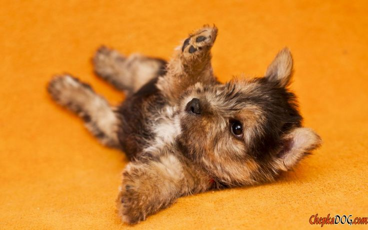 Photos jouet chiens