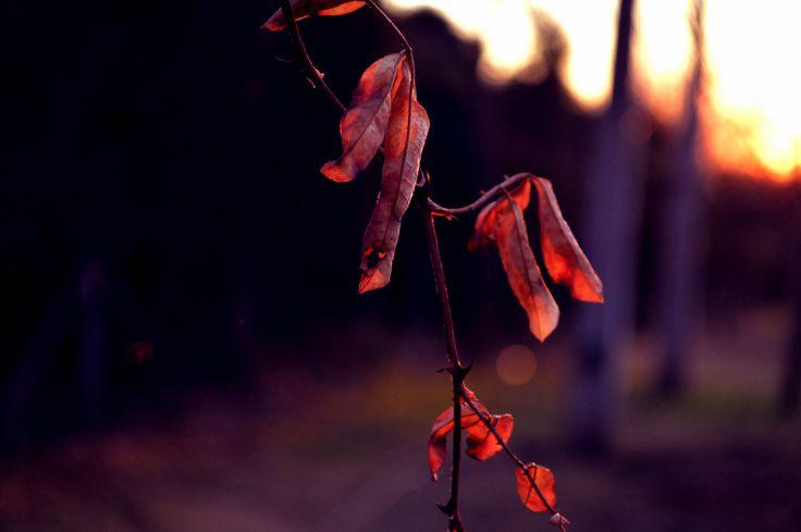 #nature #photos #fotografia