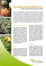 tomaatin pronssilaikkuvirus - Google-haku