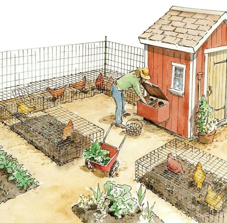 Raising your own poultry