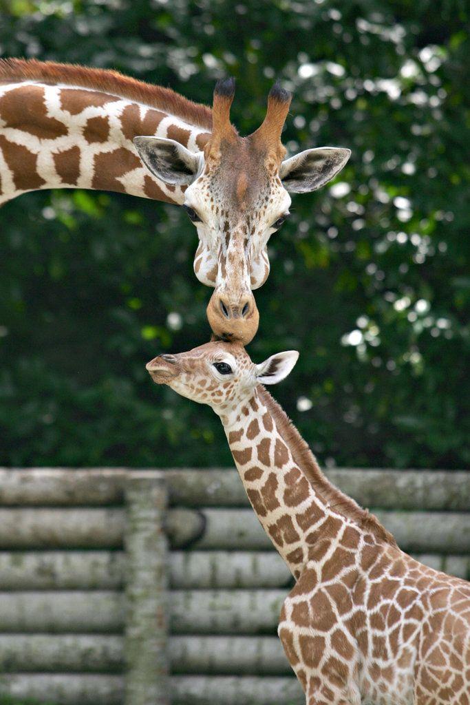 Bilder von Tierbabys und ihren Müttern   – Aww