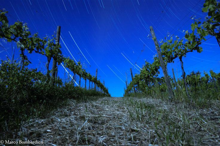 Vineyard II by Marco Bombardieri on 500px