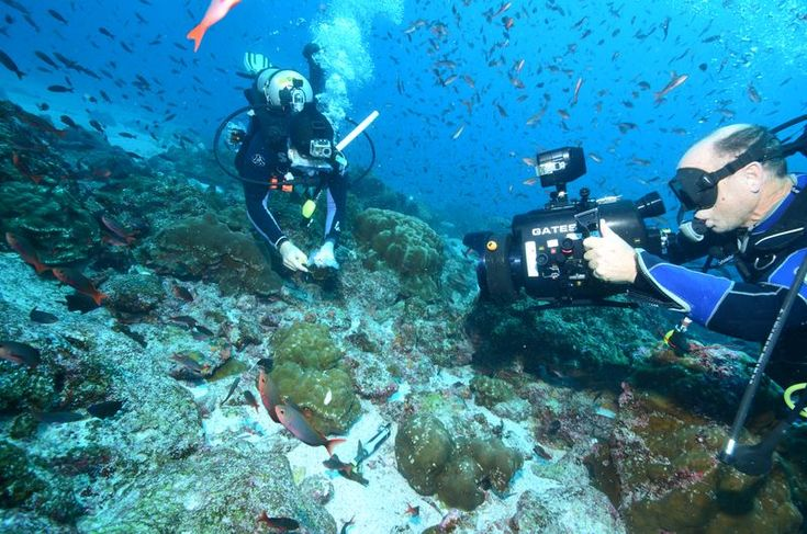 Marine biologists unmask species diversity in coral reefs