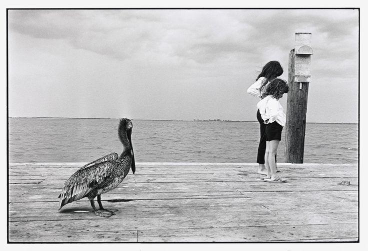 Elliott Erwitt  USA. Sanibel Island, Florida. 1965.  #Elliott Erwitt  #Black and White #Vintage