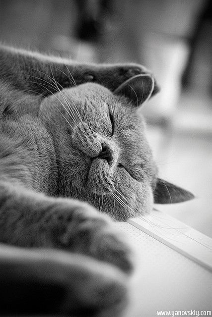 ohhh handsome sleepeh kitteh...