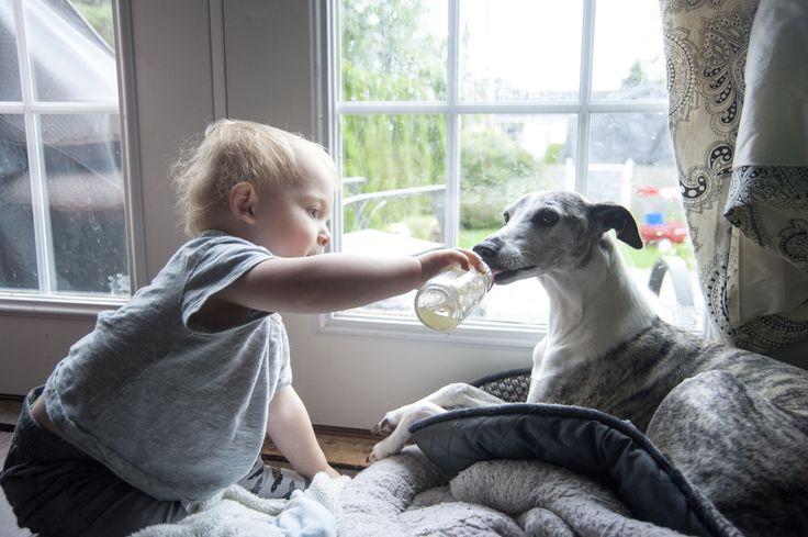 Ученые: в семьях, где есть собаки, рождаются более здоровые дети