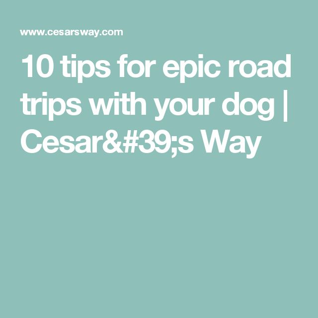10 tips for epic road trips with your dog | Cesar's Way