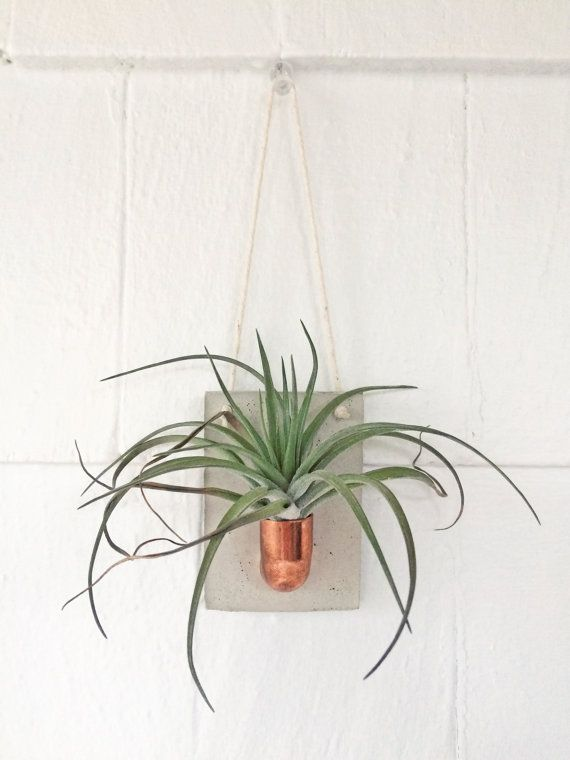 Copper + Cement Air Plant Holder | Air Plant Wall Hanging | Wall Decor |  Planter