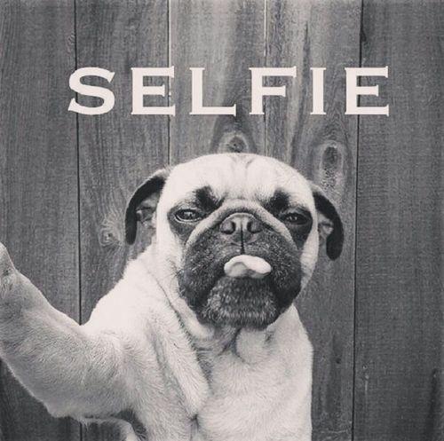 Everyone loves a good #selfie!
