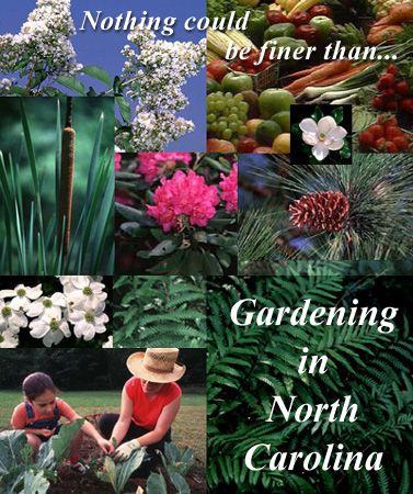 a wealth of useful information about growing plants in NC is here.