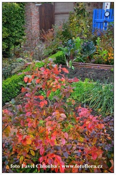 Sledujte také náš druhý zahradnický blog www.zahradniknacestach.blogspot.com V posledních dnech jsem dostal několik dotazů ohledem p...