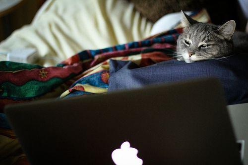 Floppie watching CUTV Montreal