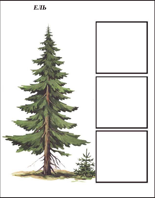 igra-derevya-el-1.jpg (632×806)