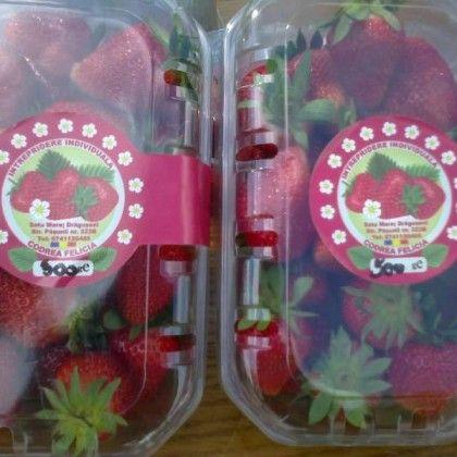 Căpșuni - Codrea Felicia