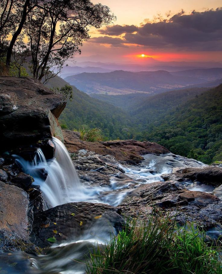 Lamington National Park, Queensland. Australia.