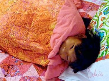 AMAZING weighted blanket tutorial including FREE downloadable pattern from Craft Nectar. Weighted blankets are great therapy tools for those who have a hard time understanding where their body is in space. Pinned by SPD Blogger Network. For more sensory-related pins, see http://pinterest.com/spdbn