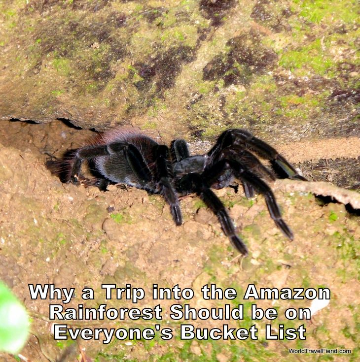 A trip into the Amazon is ridiculously awesome... even if you're not a fan of giant hairy tarantulas.  #travel #Bolivia #Amazon #AmazonRainforest http://www.worldtravelfiend.com/amazon-rainforest-experience-1/